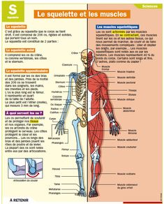 PlayBac Presse French Practice, Medicine Student, Human Body Art, Body Anatomy, Pharmacology, Nursing Students, Learn French, French Language, Science