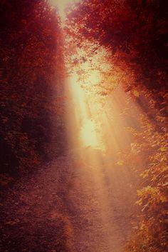 zonnestralen door bomen in de herfst.