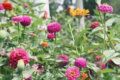 #plant #herb #растения #цветы