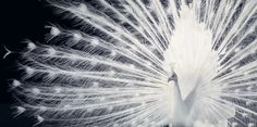 More Than Human Project by Tim Flach | inspirationfeed.com