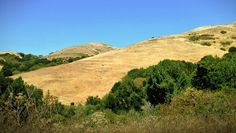 Havey Canyon Trail in Wildcat Canyon Park, East Bay Hills