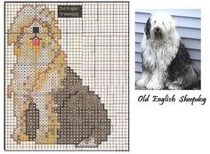 Blog de celeste :Minhas  Artes  Diversas, OLD  ENGLISH  SHEEPDOG