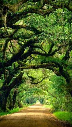 Beautiful Landscapes, Beautiful Gardens, Landscape Photography, Nature Photography, Beautiful Places, Beautiful Pictures, Edisto Island, Tree Tunnel, Botany Bay