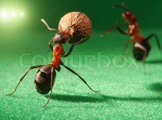 Stock image of 'ants night football'
