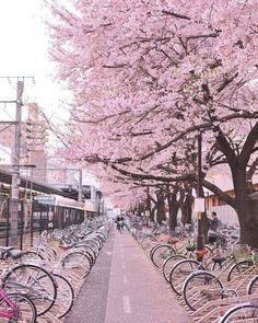 Tokyo, Japan. https://www.facebook.com/saracchannonihon/?fref=photo