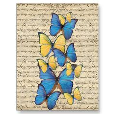 Blue & yellow butterrflies post cards