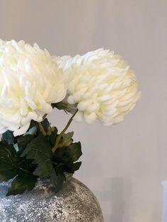 Large white chrysanthemum | White Barn White Chrysanthemum, White Barn, Large White, Weddings, Garden, Projects, Decor, Log Projects, Garten