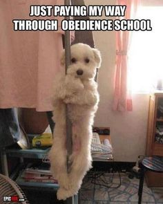Funny Animal Pictures - View our collection of cute and funny pet videos and pics. New funny animal pictures and videos submitted daily. Funny Dogs, Funny Animals, Cute Animals, Funny Memes, Animals Dog, Wild Animals, Collie, I Love Dogs, Cute Dogs