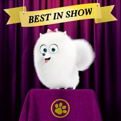 This cute Pomeranian was Best In Show. What award would your adorable pet win? | The Secret Life of Pets | In Theaters July 8