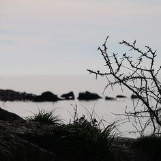 """Stenskred"" ved Sønderby Klint #visitfyn #fyn #nature #visitdenmark #naturelovers #natur #denmark #danmark #dänemark #landscape #assens #nofilter #vildmedfyn #fynerfin #assensnatur #vielskernaturen #visitassens #instapic #picoftheday #sea #december #winter #waves"