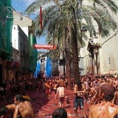 Join a tomato fight in – La Tomatina, in Bunol, Spain.