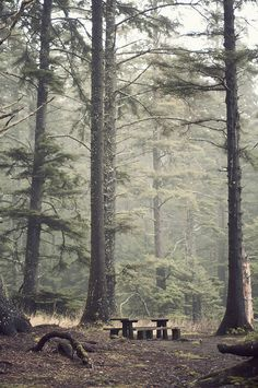 sometimes you really just need a walk in a foggy pine forest.