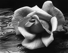 Another one of my favorite taken by Ansel Adams.