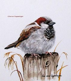 """His eye is on the sparrow, and I know He is watching me.  Sparrow Bird Art by Bird Artist Sue van Coppenhagen"