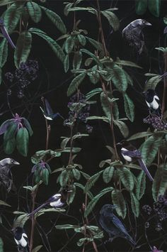Folia Dark Wallpaper By Witch And Watchman - Shop Page 10 - 11 - Shop The Catalogue