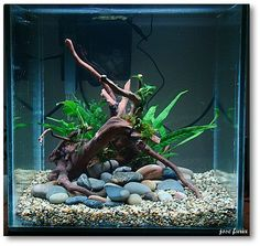 30cm Cube journal... - The Planted Tank Forum