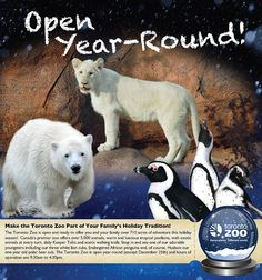 Open Year Round Toronto Zoo, 9 Year Olds, Holiday Traditions, Exotic Pets, Polar Bear, Adventure, Fun, Animals, Animales