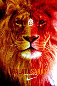 I love galatasaray Crazy Wallpaper, Lion Wallpaper, Wallpaper Backgrounds, Lion King 3, All Wall, Creepy, Cute Animals, Photo And Video, Aaliyah