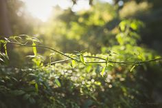 Walk in the Light | Green by Kim Peterson