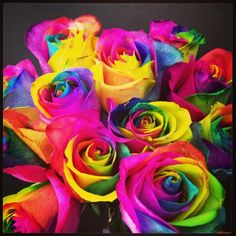 Rainbow Roses- my absolute favorite flowers because even when they dry out they still keep their colors Love Rainbow, Rainbow Flowers, Over The Rainbow, Rainbow Colors, Pretty Flowers, Beautiful Roses, Colorful Roses, Colorful Smoke, Beautiful Flowers Wallpapers