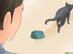 Wissen wann deine Katze stirbt – wikiHow