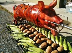 Learning the art of whole beast slow roasting at a catered Vancouver Island summer pig roast party.