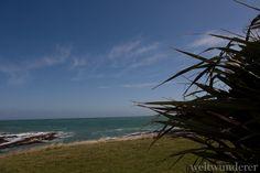 Curio Bay, NZ - most stunning campsite ever