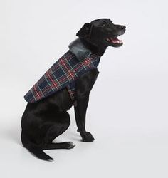Shop The Family Dog Series at Janie and Jack. Matching looks for everyone's bestfriend. | Girls plaid dresses | Boy plaid suits | Dog plaid coats  #afflink
