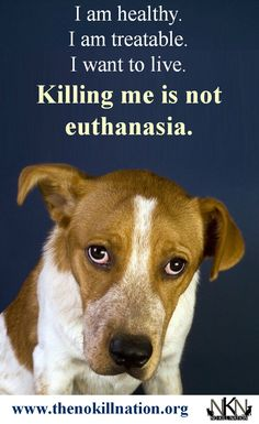 Stop the killing at animal shelters. No Kill shelters are all over America now