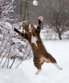 I'm gonna catch that snowball