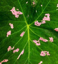 """139 Me gusta, 2 comentarios - Diseño Botánico (@jungle_________) en Instagram: """"Fragmentos que inspiran:  """"Dejar llegar, dejar ser, dejar ir.   Hay cierto vicio que nace de forma…"""" Plant Leaves, Plants, Instagram, Shape, Letting Go, Plant, Planets"""
