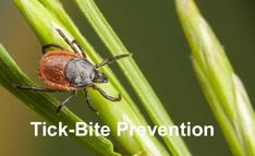 Ticks and Pets: How to Spot, Remove and Avoid Them Altogether. The best way to deal with ticks is to prevent them from getting on your pet in the first place. Take these precautions to help keep ticks off dogs and cats. Tick Bite, Pest Management, Lyme Disease, Quites, Go Outside, Pest Control, Tick Control, Bushcraft, The Great Outdoors