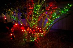 red and green christmas lights bush at lights of tejas in giddings tx green christmas
