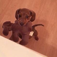 Cute Dog Toys, Cute Funny Animals, Cute Baby Animals, Pet Toys, Animals And Pets, Toy Puppies, Cute Puppies, Cute Dogs, Funny Dogs