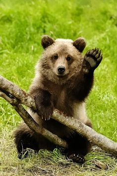 I might be scared of bears but this picture lessened my fear a bit.