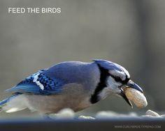 Do you feed the birds? 10 Homemade bird feeders...