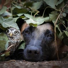 crescentmoon animalia Magnificent Beasts, Dogs, Animales, Pet Dogs, Doggies