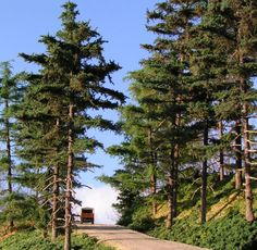best HO scale trees   Just some pictures of all kind of Ho and N trees