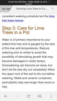 Key lime care