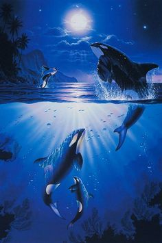 Christian Lassen ~ under sea art ~ orcas by moonlight