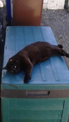 Pumba Cat   Pawshake Birkenhead