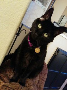 Maxine is looking so lovely! Wet Noses Pet Sitting Fort Collins, Loveland, Pet Sitter, Dog Walker, Cat Sitter #kitten #cat #cats