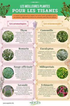 Holistic Nutrition, Health And Nutrition, Health Tips, Health Fitness, Nutrition Guide, Us Foods, Old Recipes, Herbal Tea, Eating Habits