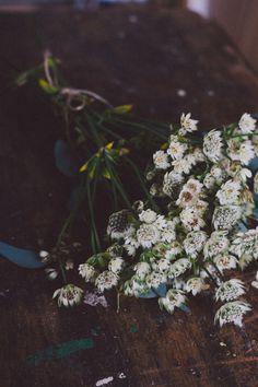 Flowers & props - Carolyn Carter Blog