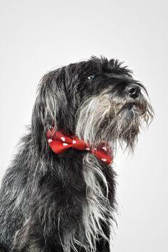 This fellow wears his Onni print bow with pride || Tämä karvainen kaveri komeilee rusetti kaulassa Joko, Cute, Animals, Style, Swag, Animales, Animaux, Kawaii, Animal