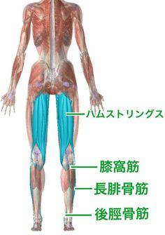 しゃがめない原因は大人も子供も同じ【柔らかくするべき4つの関節】 | セルフケアラボ【柴雅仁Blog】 Anatomy Reference, Self Care, Health Fitness, Legs, Workout, Massage, Chinese Medicine, Anatomy And Physiology, Health And Fitness