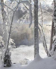 Beautiful Nature (swansong-willows: (via Christmas!))