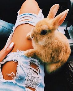 Cute little bunny Cute Puppies, Cute Dogs, Cute Babies, Cute Little Animals, Cute Funny Animals, Baby Bunnies, Cute Creatures, Animals Beautiful, Animals And Pets