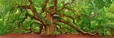 Tree of Hope    Charleston, South Carolina