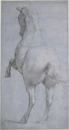 Rearing Horse in Rear Three-Quarter View  Anonymous, Italian, Veronese, 16th century - Black and white chalk on paper prepared with violet wash.